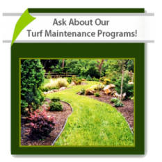 Ask About Our Turf Maintenance Programs!